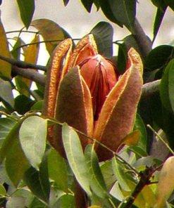 Sky Fruit 3