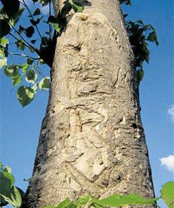 Gamhar Tree