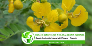 Health Benefits of Avaram Senna Flowers