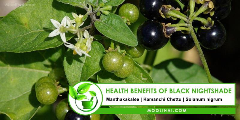 Health Benefits of Black Nightshade