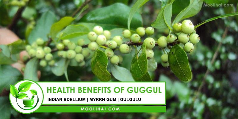 Health Benefits of Guggul