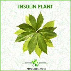 Insulin-Plant